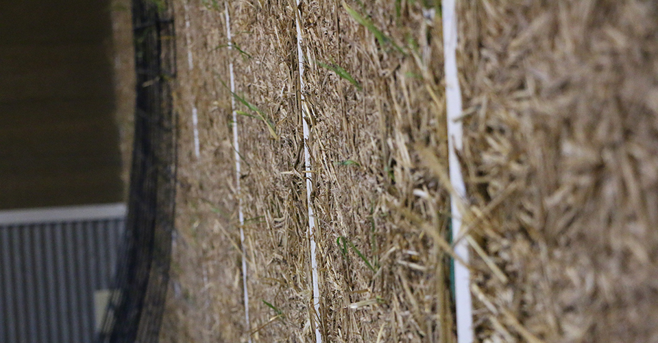 Clay Straw Wall - Straw Wall Sprouting