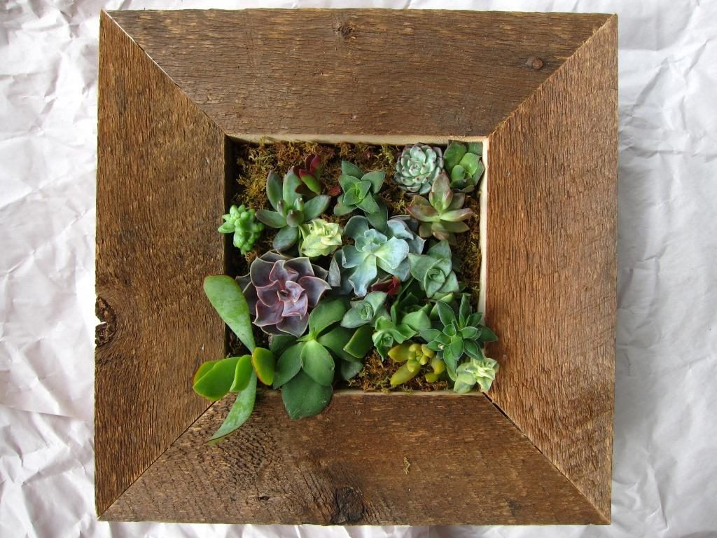 "Succulent Picture Frame 12"" x 12"""