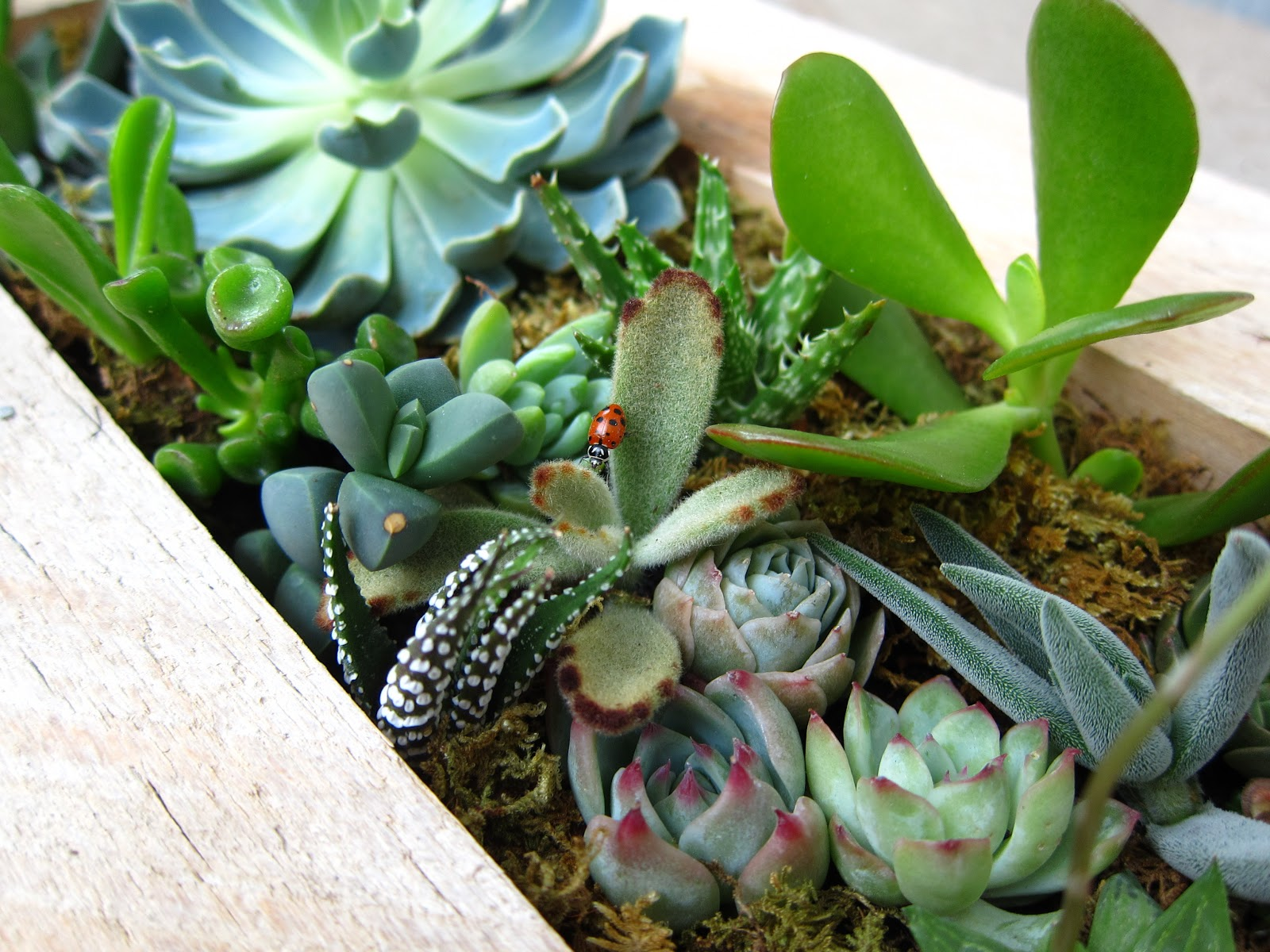 succulent tips and care instructions build sow grow. Black Bedroom Furniture Sets. Home Design Ideas